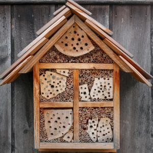 Bug hotels  where the good bugs can check in